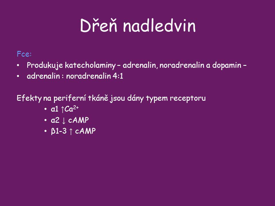 Dřeň nadledvin Fce: Produkuje katecholaminy – adrenalin, noradrenalin a dopamin – adrenalin : noradrenalin 4:1.