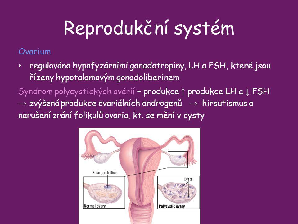 Reprodukční systém Ovarium