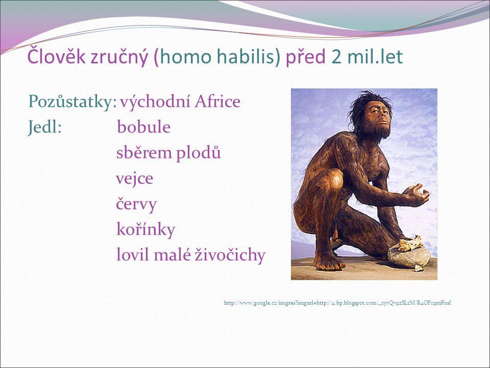 Člověk zručný (homo habilis) před 2 mil.let