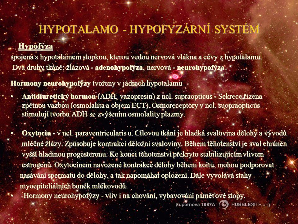 HYPOTALAMO - HYPOFYZÁRNÍ SYSTÉM