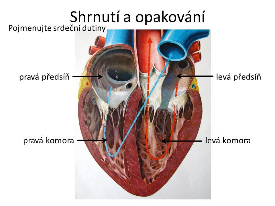 Shrnutí a opakování Pojmenujte srdeční dutiny pravá předsíň