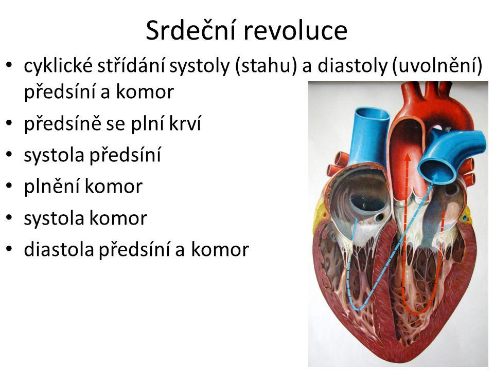 Srdeční revoluce cyklické střídání systoly (stahu) a diastoly (uvolnění) předsíní a komor. předsíně se plní krví.