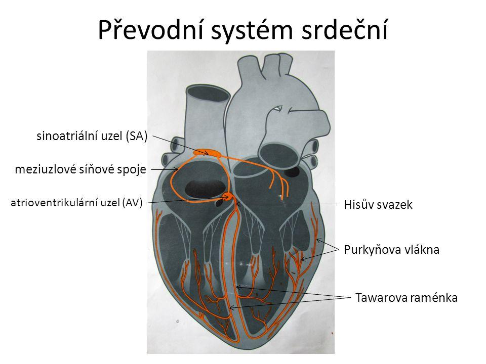 Převodní systém srdeční