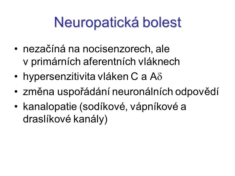 Neuropatická bolest nezačíná na nocisenzorech, ale v primárních aferentních vláknech. hypersenzitivita vláken C a A