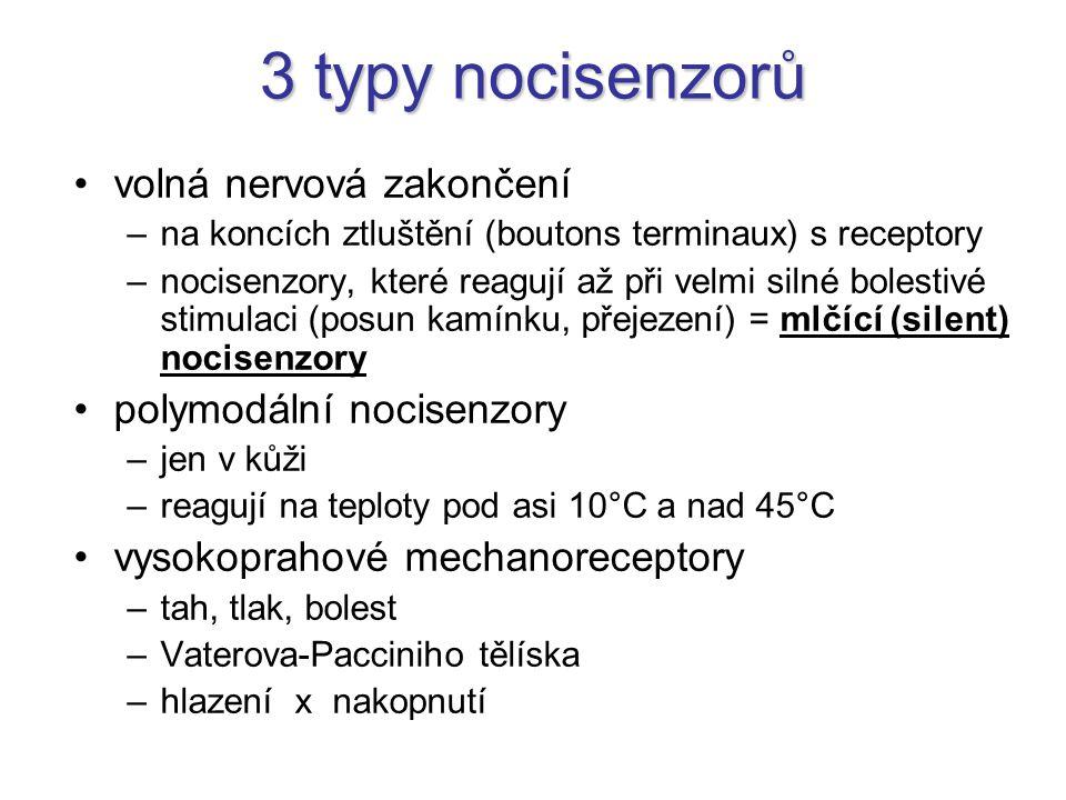 3 typy nocisenzorů volná nervová zakončení polymodální nocisenzory