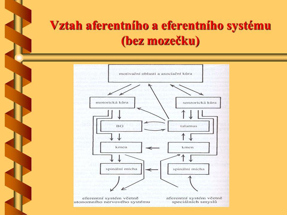 Vztah aferentního a eferentního systému (bez mozečku)