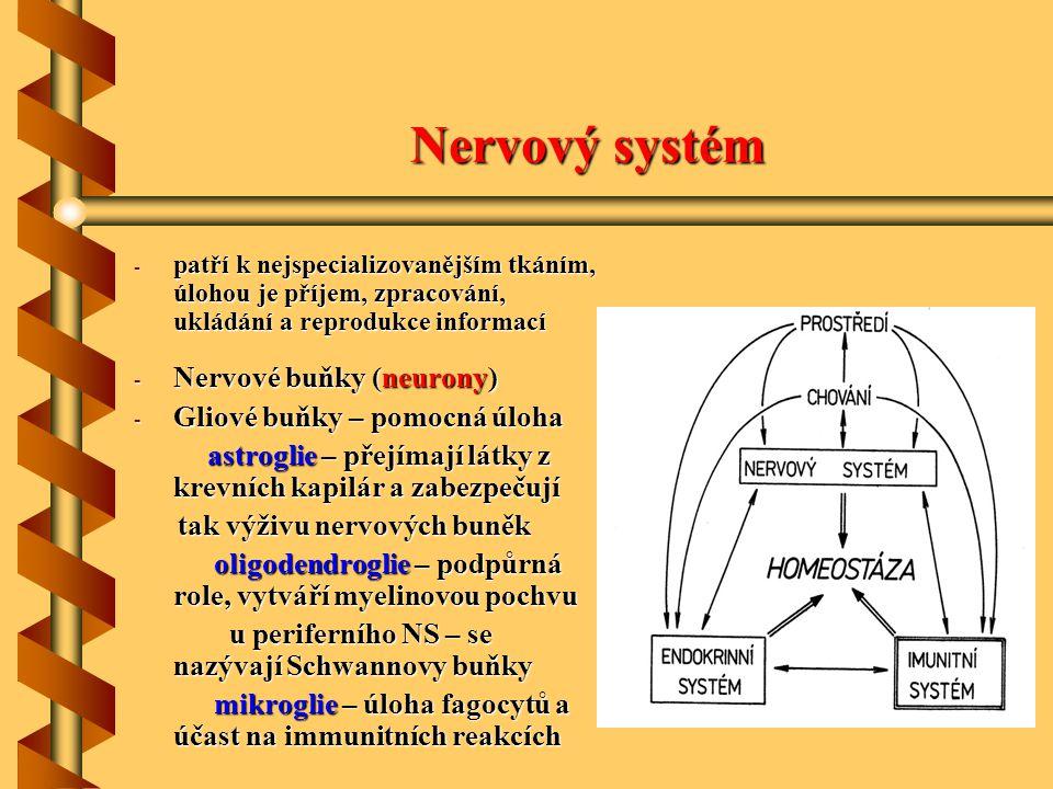 Nervový systém Nervové buňky (neurony) Gliové buňky – pomocná úloha