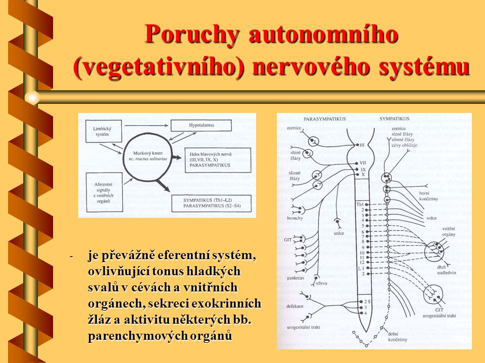Poruchy autonomního (vegetativního) nervového systému