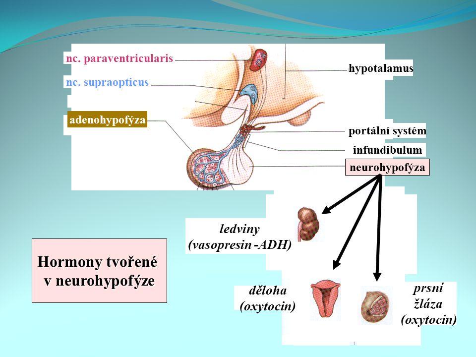 Hormony tvořené v neurohypofýze