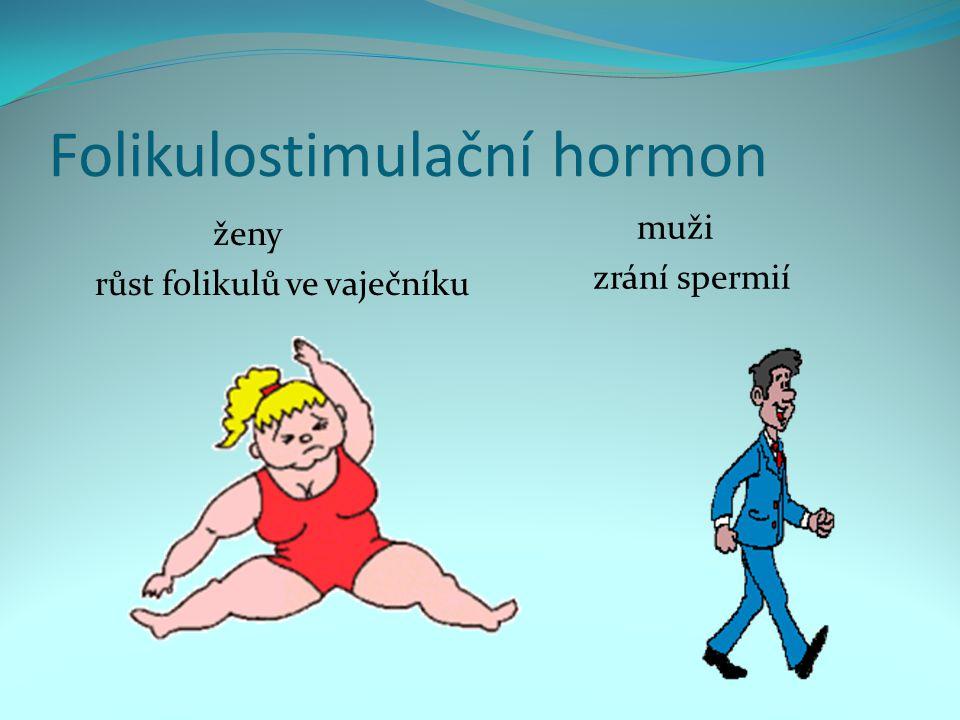 Folikulostimulační hormon