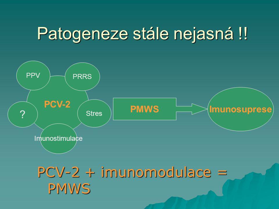 Patogeneze stále nejasná !!