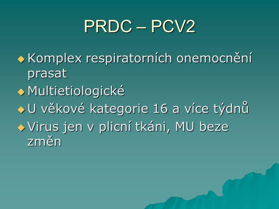 PRDC – PCV2 Komplex respiratorních onemocnění prasat Multietiologické