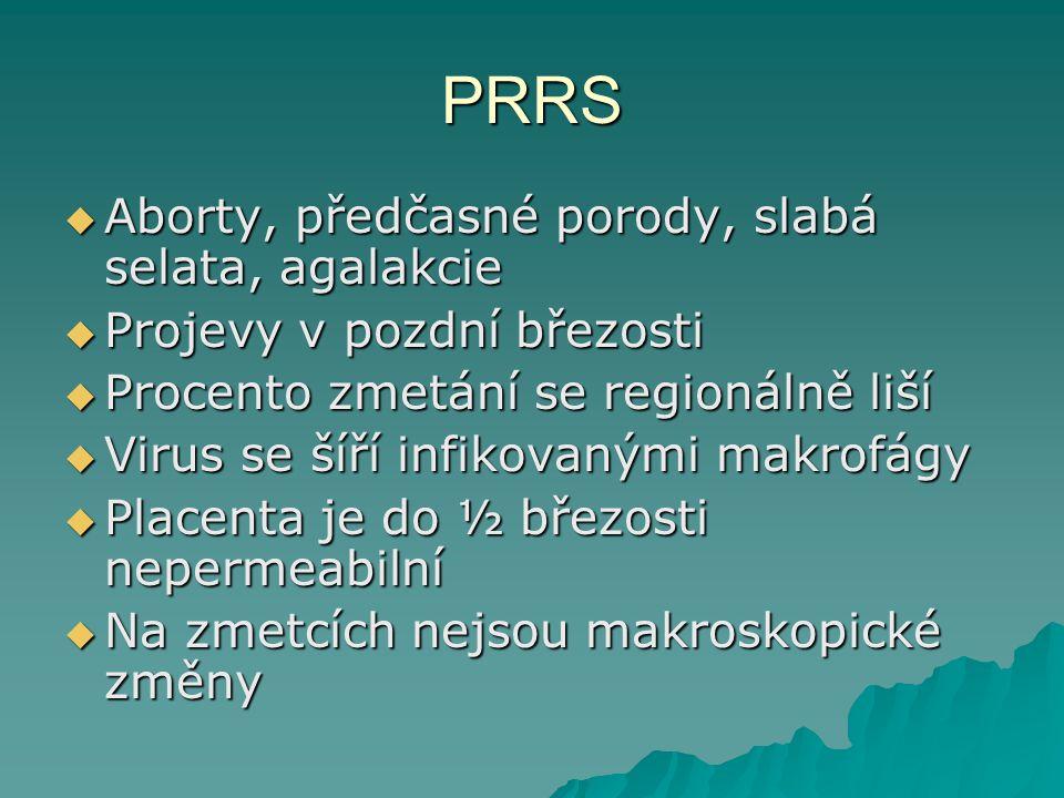 PRRS Aborty, předčasné porody, slabá selata, agalakcie