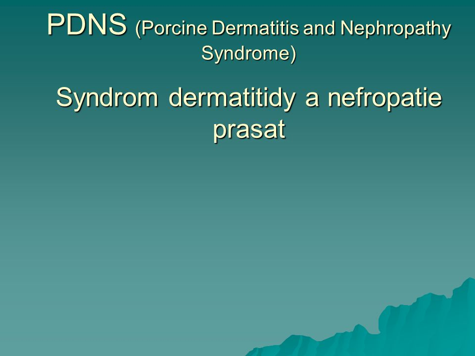 PDNS (Porcine Dermatitis and Nephropathy Syndrome) Syndrom dermatitidy a nefropatie prasat
