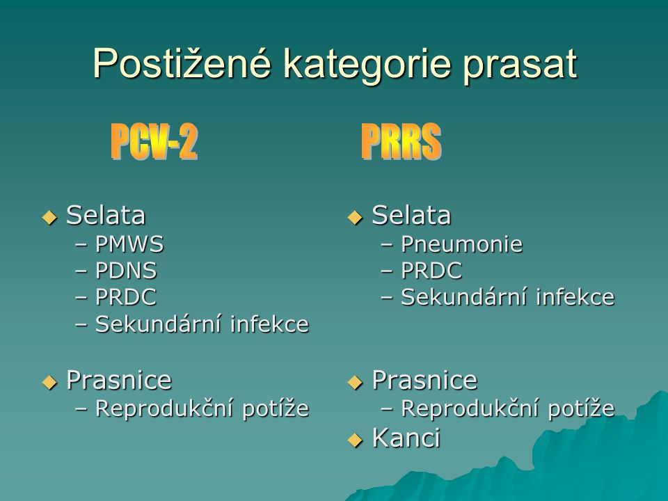 Postižené kategorie prasat