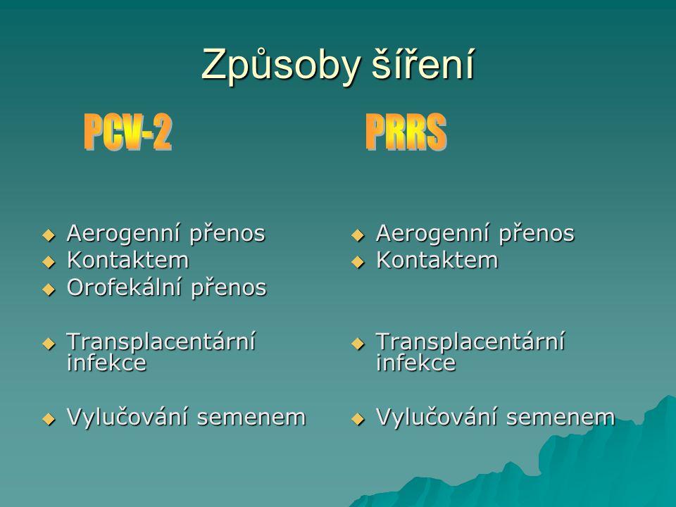 Způsoby šíření PCV-2 PRRS Aerogenní přenos Kontaktem Orofekální přenos
