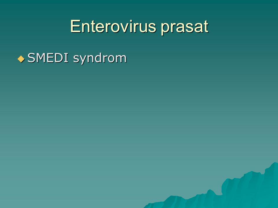 Enterovirus prasat SMEDI syndrom