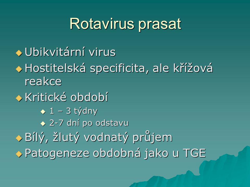 Rotavirus prasat Ubikvitární virus