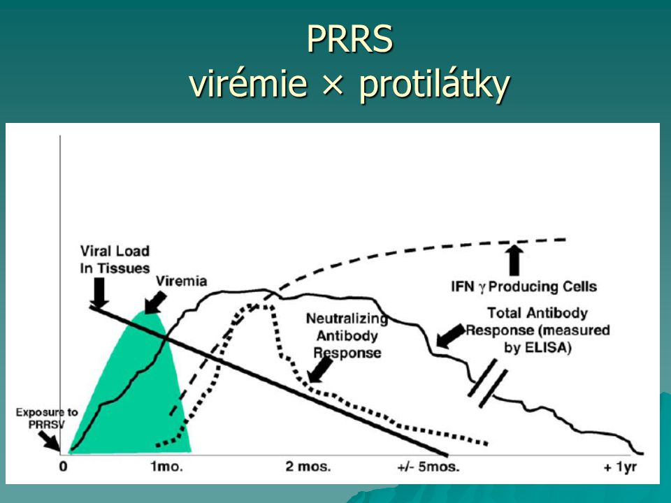 PRRS virémie × protilátky