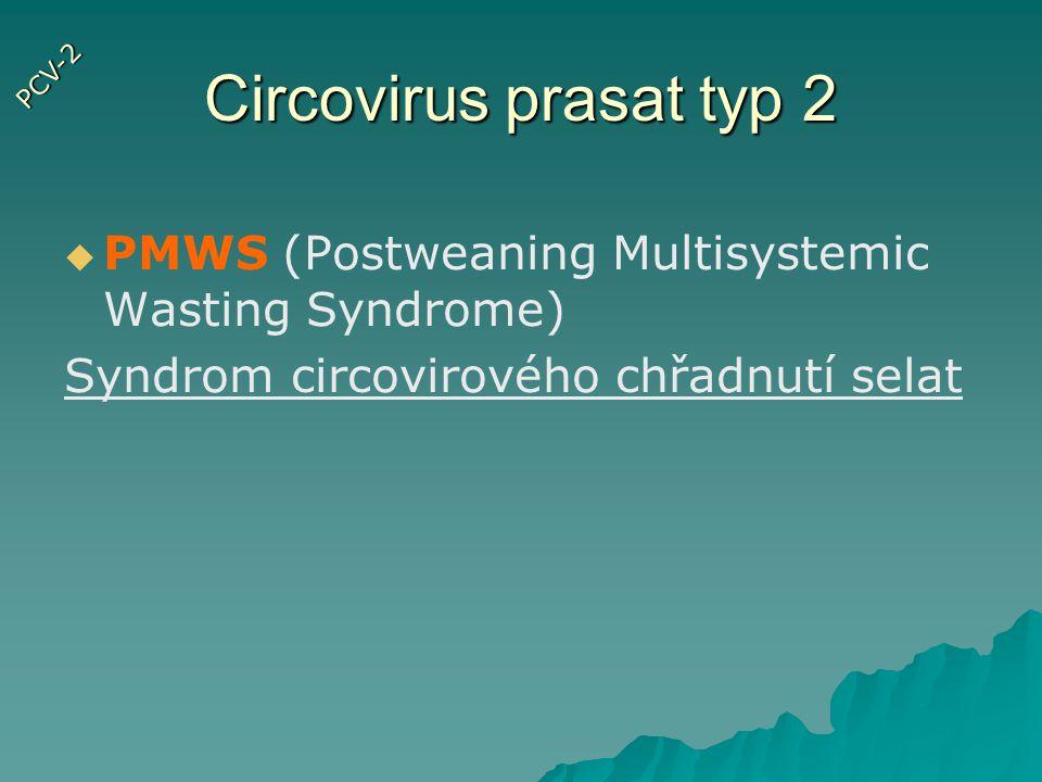Circovirus prasat typ 2 PCV-2.