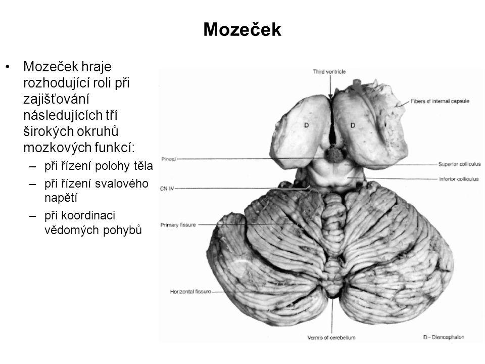 Mozeček Mozeček hraje rozhodující roli při zajišťování následujících tří širokých okruhů mozkových funkcí:
