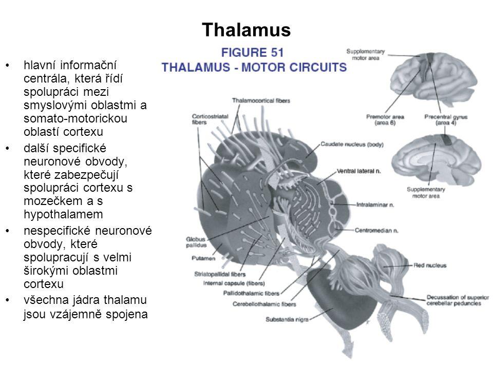 Thalamus hlavní informační centrála, která řídí spolupráci mezi smyslovými oblastmi a somato-motorickou oblastí cortexu.