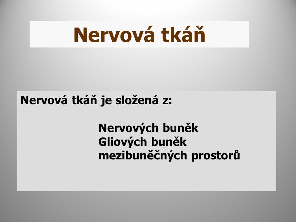 Nervová tkáň Nervová tkáň je složená z: Nervových buněk Gliových buněk