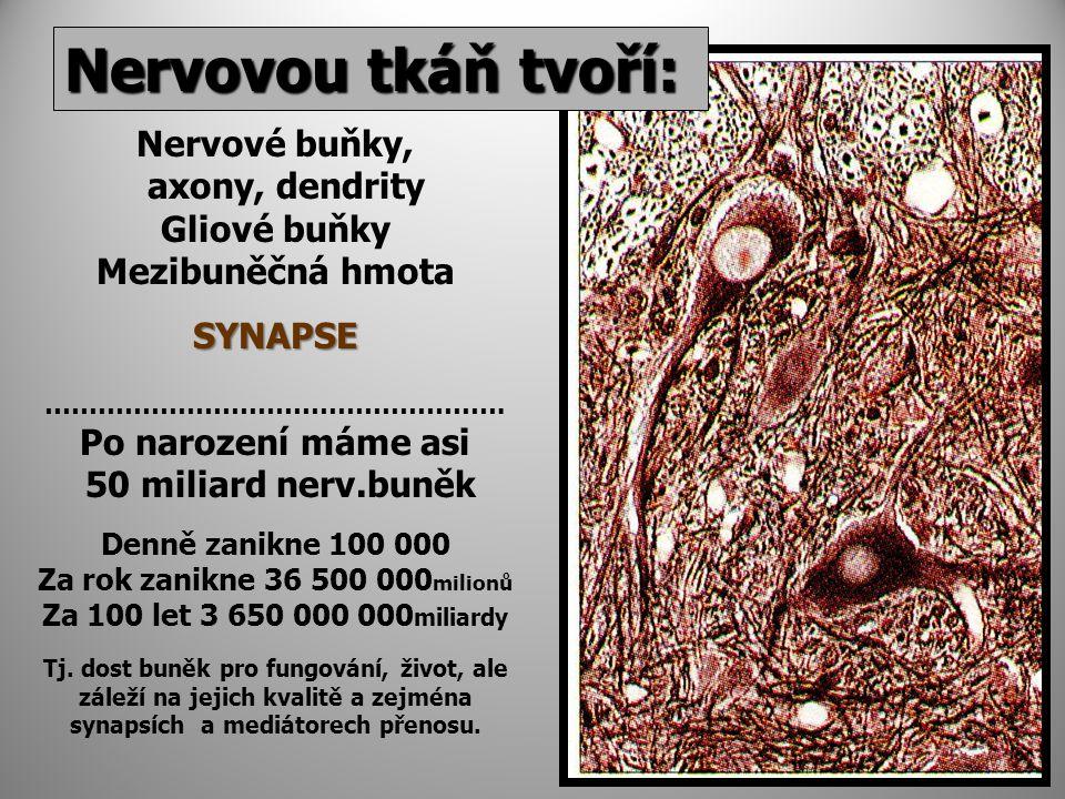 Nervovou tkáň tvoří: Nervové buňky, axony, dendrity Gliové buňky