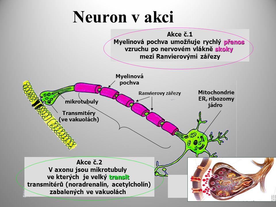 Neuron v akci Akce č.1 Myelinová pochva umožňuje rychlý přenos
