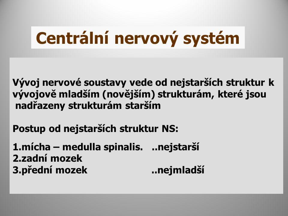 Centrální nervový systém