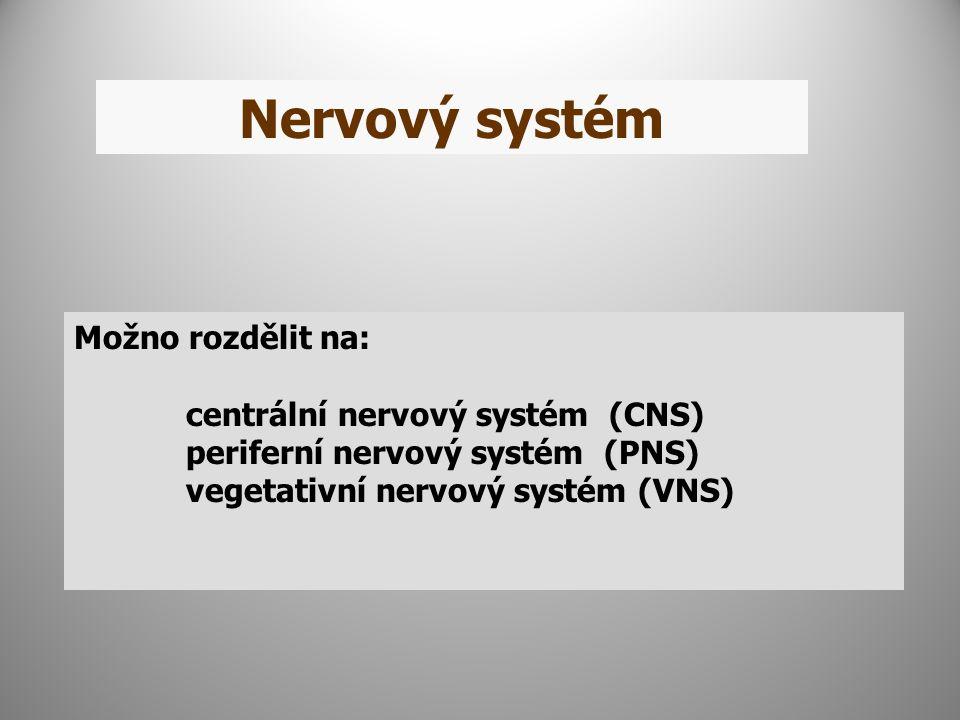 Nervový systém Možno rozdělit na: centrální nervový systém (CNS)