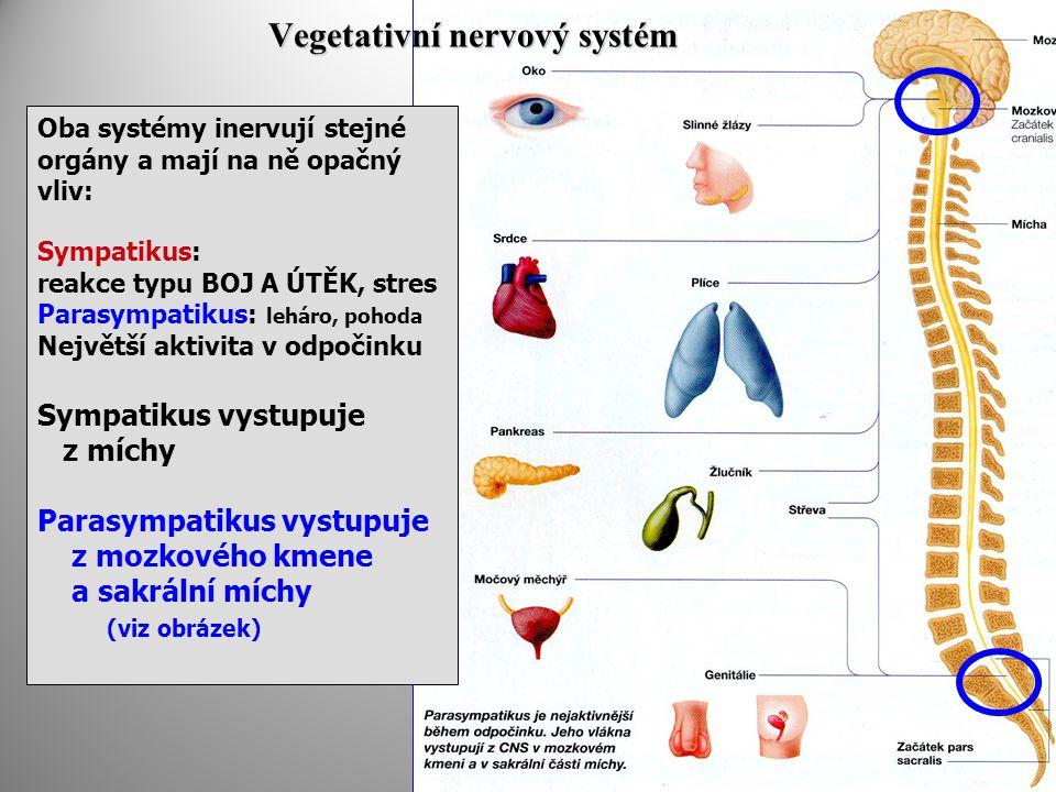 Vegetativní nervový systém