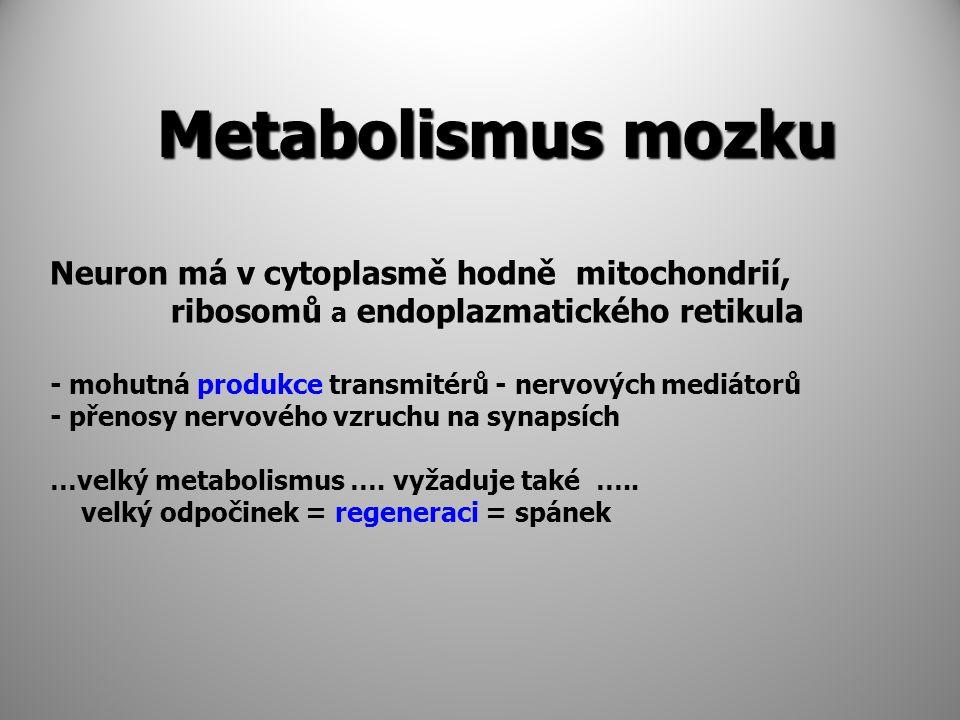 Metabolismus mozku Neuron má v cytoplasmě hodně mitochondrií,