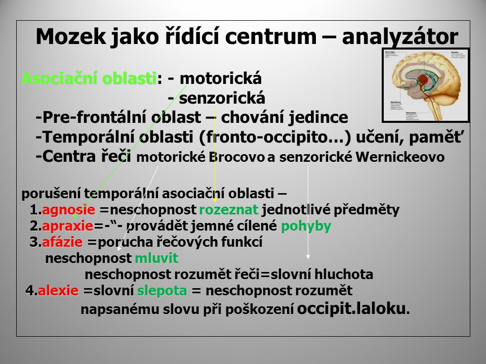 Mozek jako řídící centrum – analyzátor Asociační oblasti: - motorická