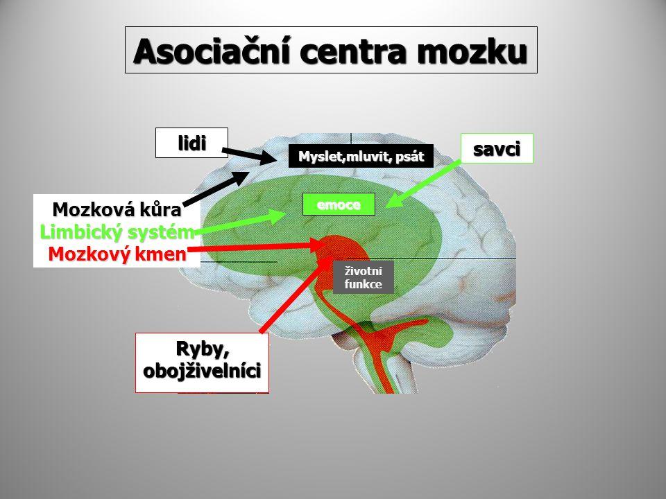 Asociační centra mozku