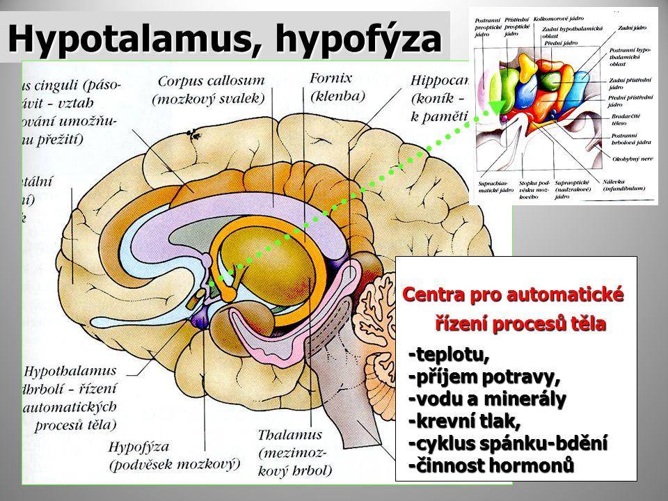 Hypotalamus, hypofýza Centra pro automatické řízení procesů těla