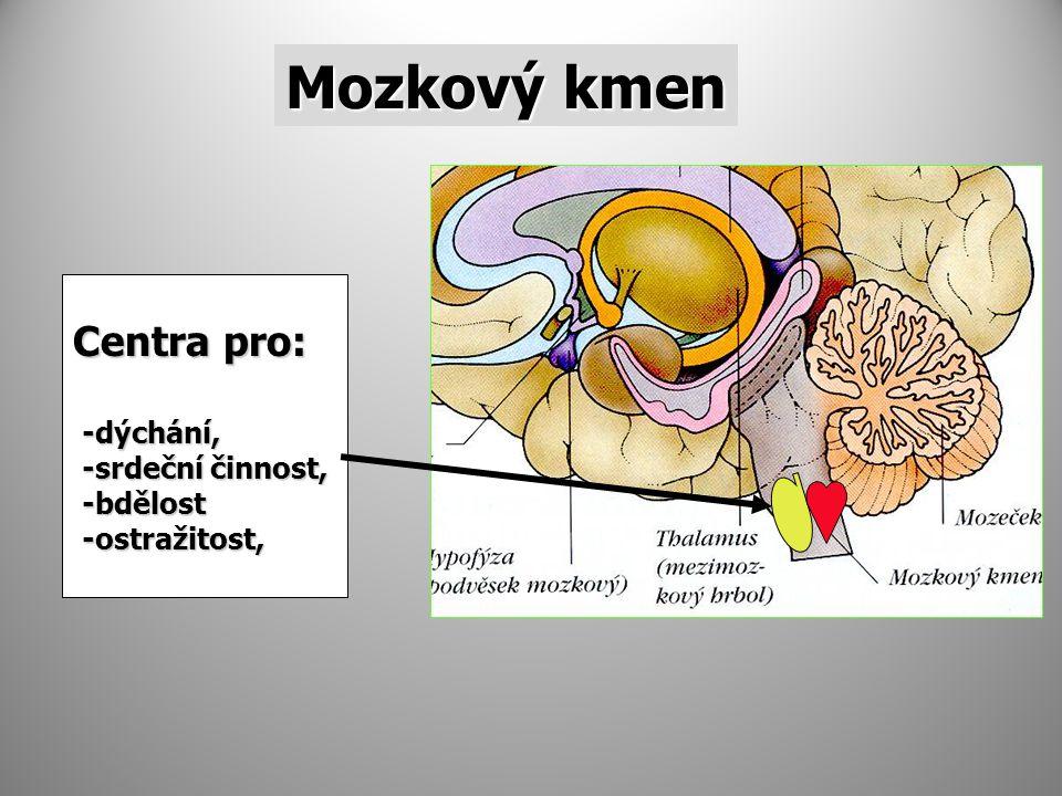 Mozkový kmen Centra pro: -dýchání, -srdeční činnost, -bdělost