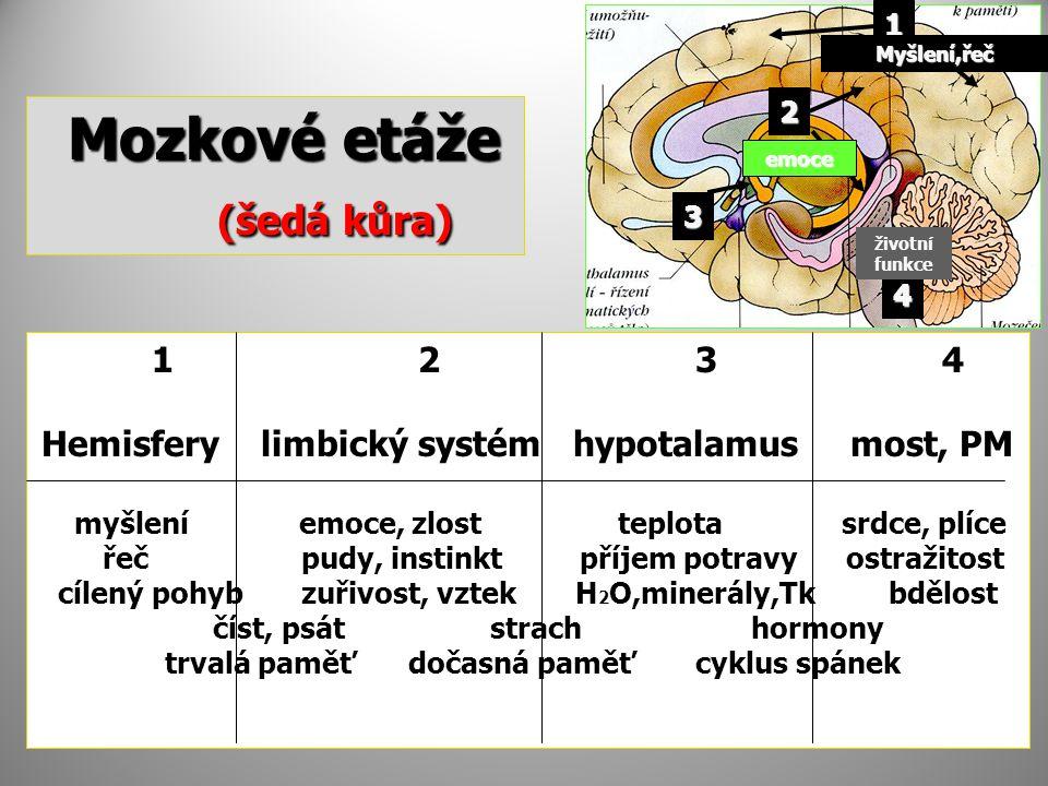 Mozkové etáže (šedá kůra) 1 2 3 4