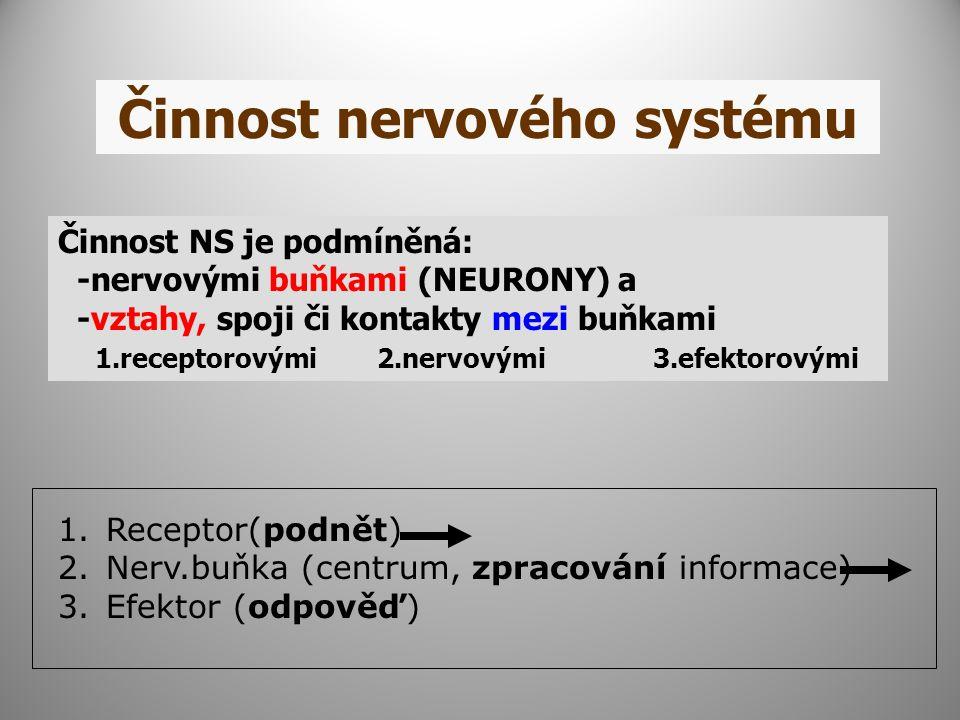 Činnost nervového systému