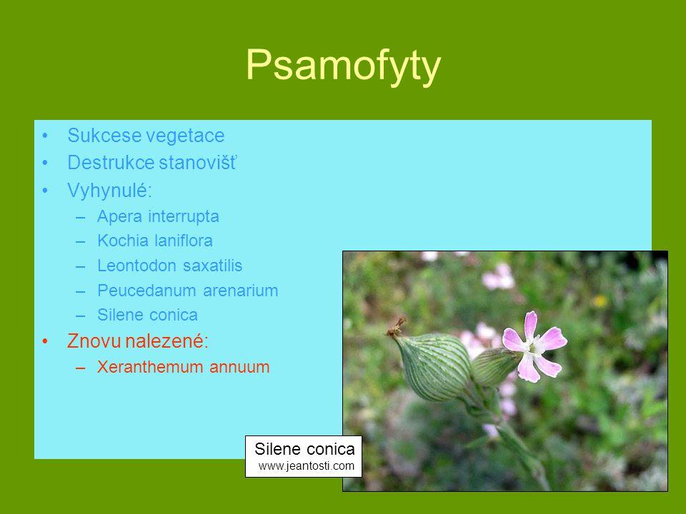 Psamofyty Sukcese vegetace Destrukce stanovišť Vyhynulé: