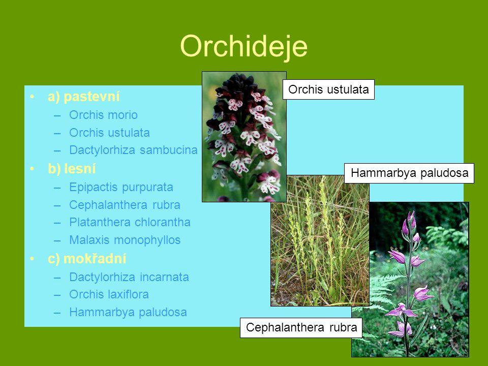 Orchideje a) pastevní b) lesní c) mokřadní Orchis ustulata