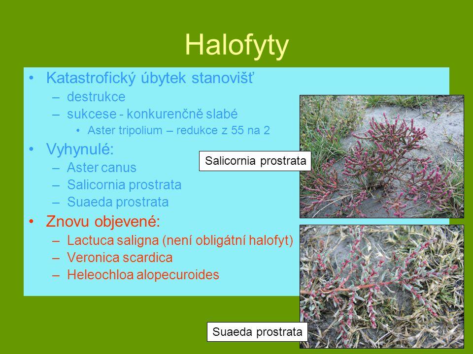 Halofyty Katastrofický úbytek stanovišť Vyhynulé: Znovu objevené: