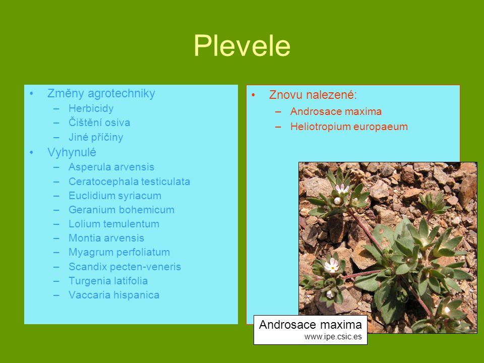 Plevele Změny agrotechniky Vyhynulé Znovu nalezené: Androsace maxima