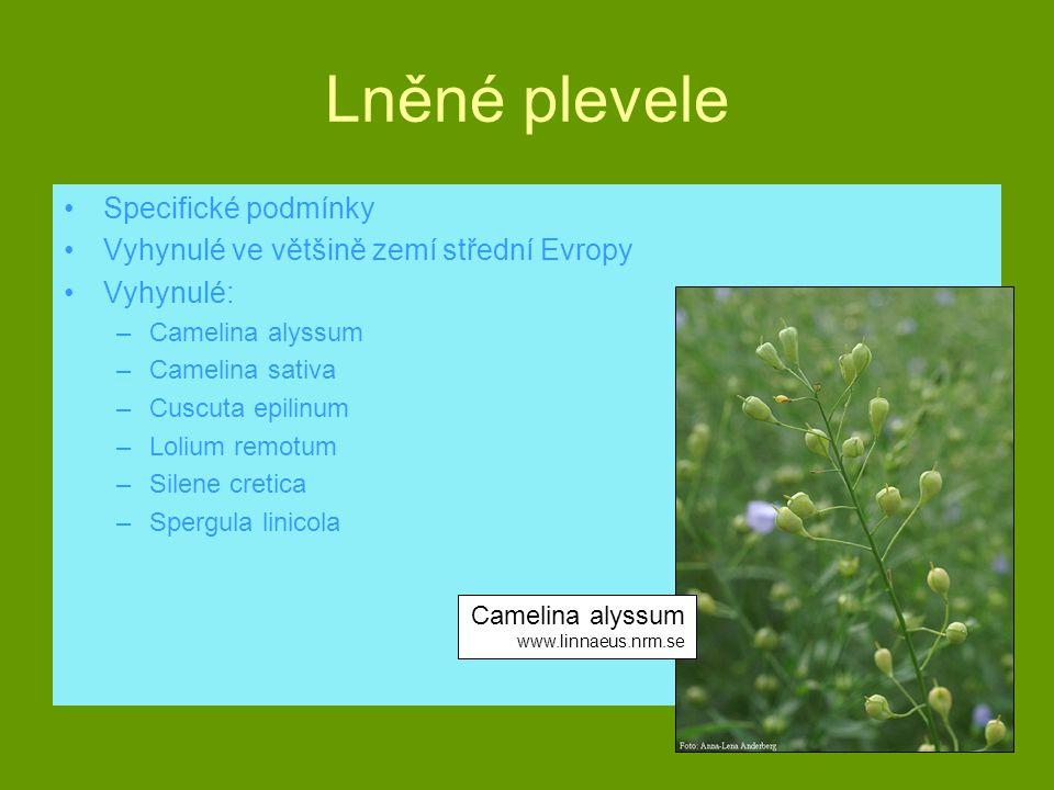 Lněné plevele Specifické podmínky