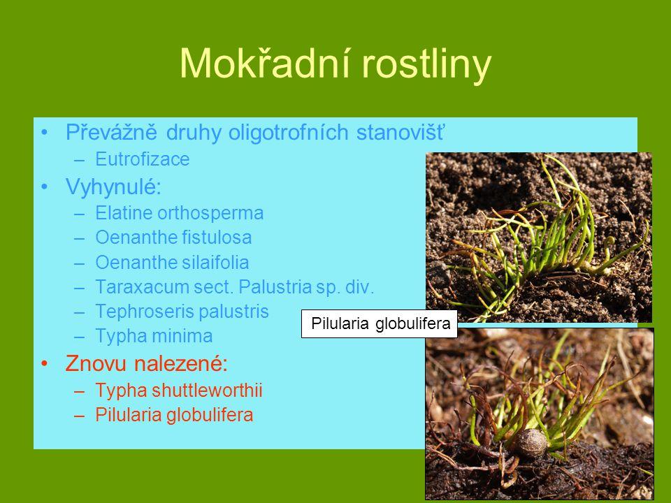 Mokřadní rostliny Převážně druhy oligotrofních stanovišť Vyhynulé: