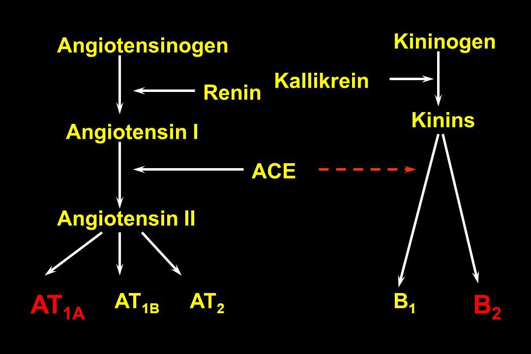 AT1A B2 Kininogen Angiotensinogen Kallikrein Renin Kinins