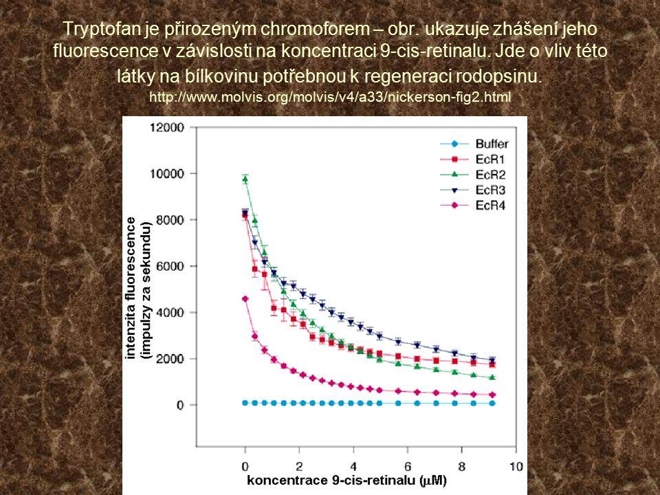 Tryptofan je přirozeným chromoforem – obr