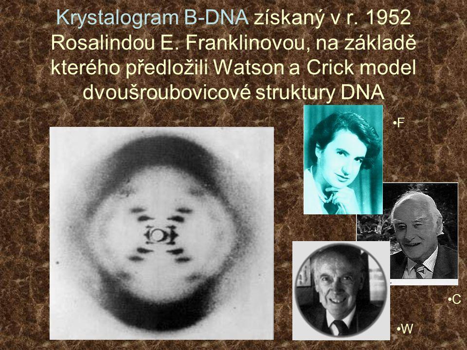Krystalogram B-DNA získaný v r. 1952 Rosalindou E