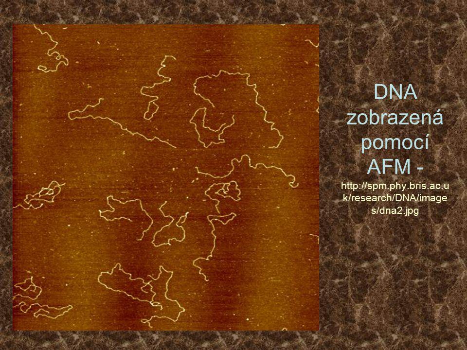 DNA zobrazená pomocí AFM - http://spm. phy. bris. ac