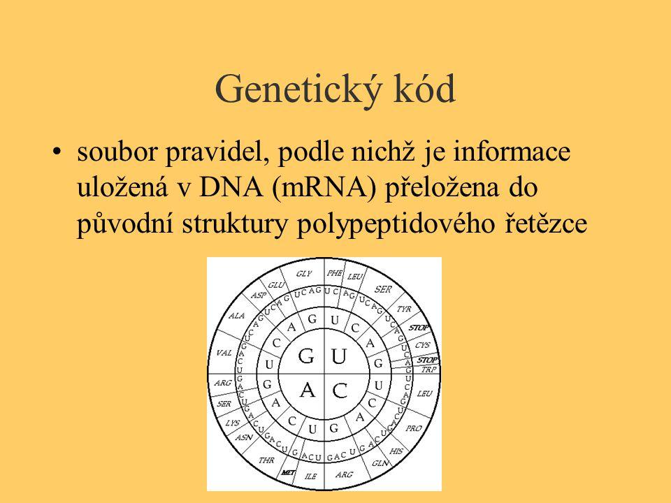 Genetický kód soubor pravidel, podle nichž je informace uložená v DNA (mRNA) přeložena do původní struktury polypeptidového řetězce.